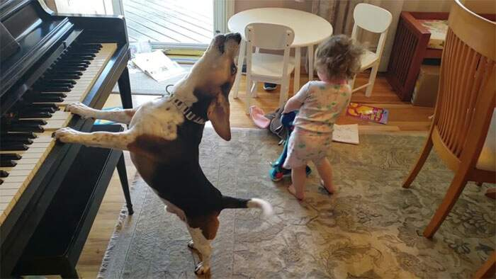 Bambina di 2 anni balla mentre il cane suona il piano e canta