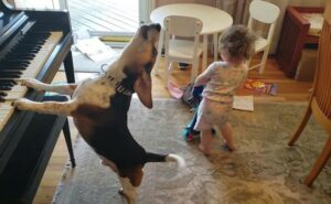Sua figlia di 2 anni balla mentre il cane suona il piano: il video che salverà l'umanità