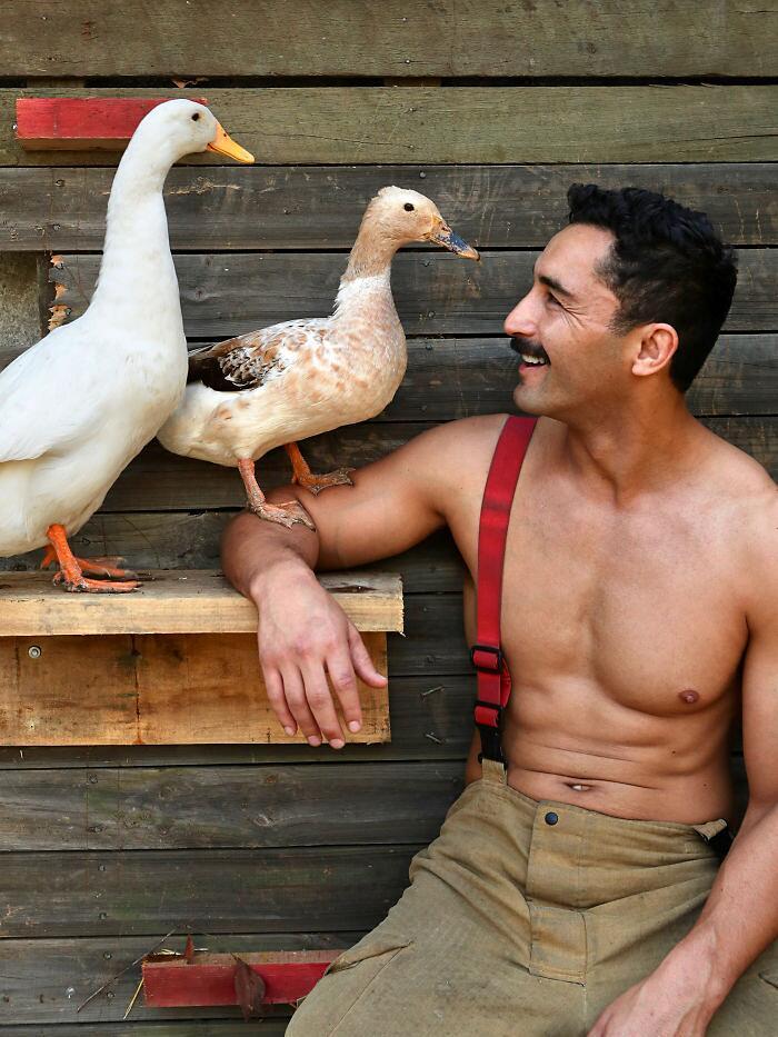 Calendario beneficenza vigili del fuoco australiani e animali
