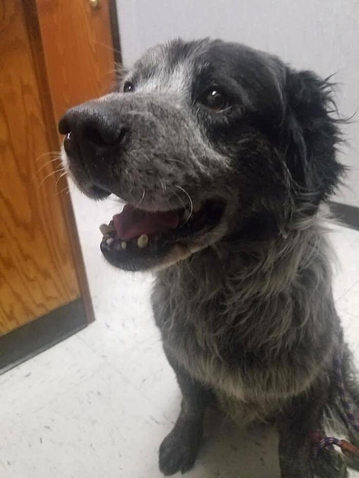 Cane abbandonato e ferito viene adottato