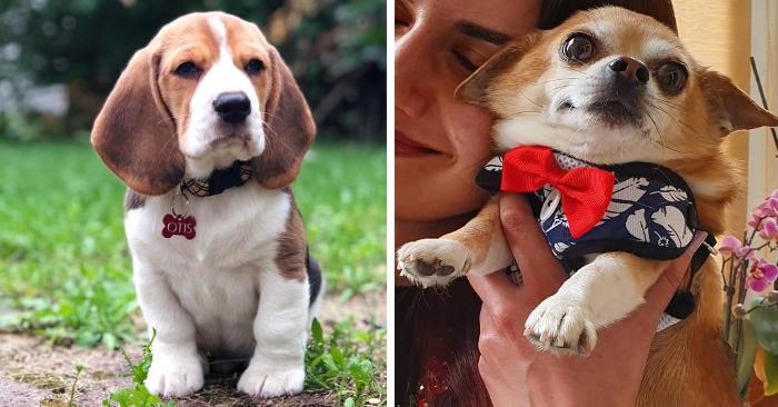 15 razze di cani che sembrano sempre cuccioli