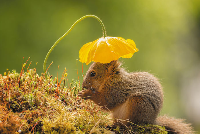 Foto di scoiattoli adorabili