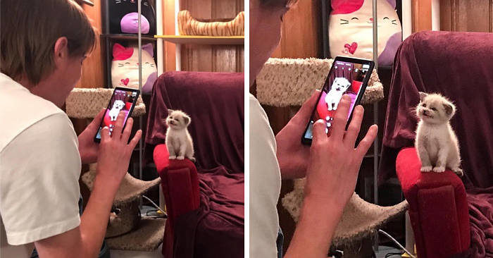 Gattina randagia sorride durante le foto e conquista internet
