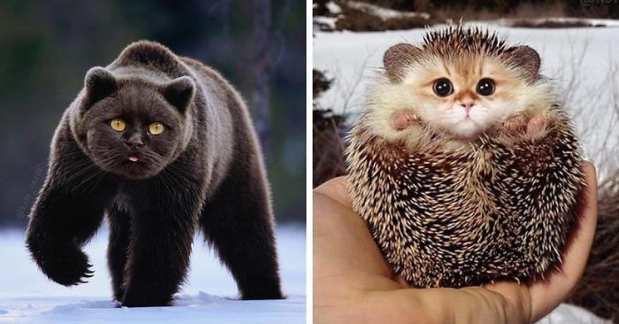 Come sarebbe il mondo se tutti avessero la faccia di un gatto