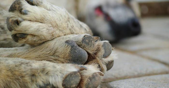 USA, maltrattamenti sugli animali diventano crimine federale insieme a terrorismo e rapimenti