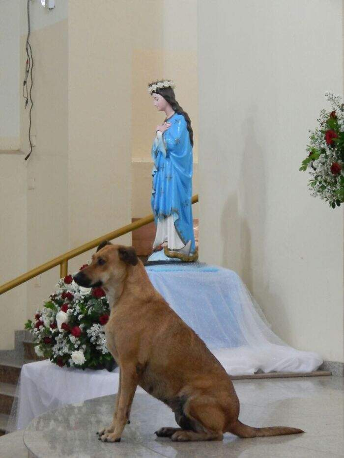 Prete fa partecipare i cani senzatetto alla messa per aiutarli a trovare una famiglia