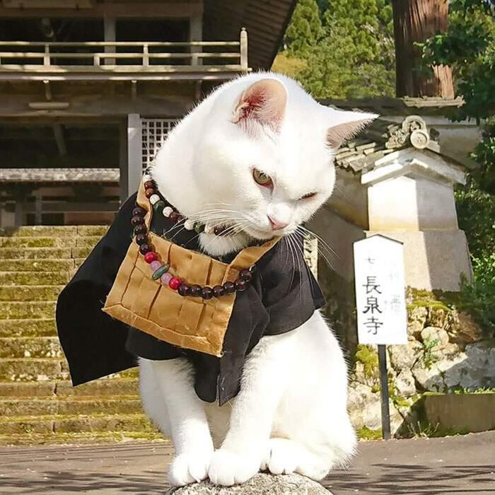 Tempio di gatti in Giappone, Santuario di Miao Miao
