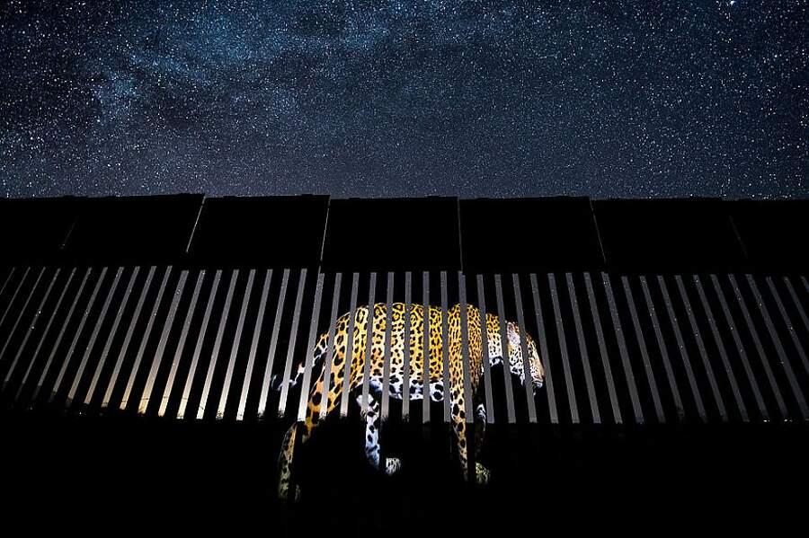 Vincitori Wildlife Photographer of the Year 2019