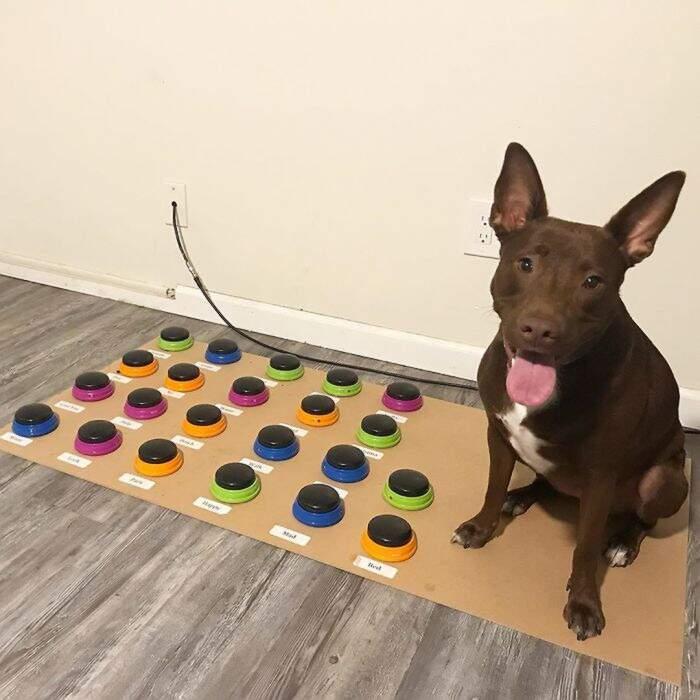 Logopedista insegna al suo cane a parlare attraverso una macchina: sa già 29 parole