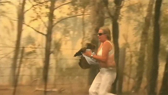 Lewis non ce l'ha fatta: il koala salvato da un incendio è morto