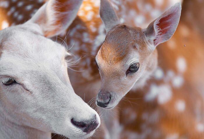 Foto di animali teneri Goran Anastasovski