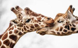 28 foto di animali amorevoli tanto quanto gli umani