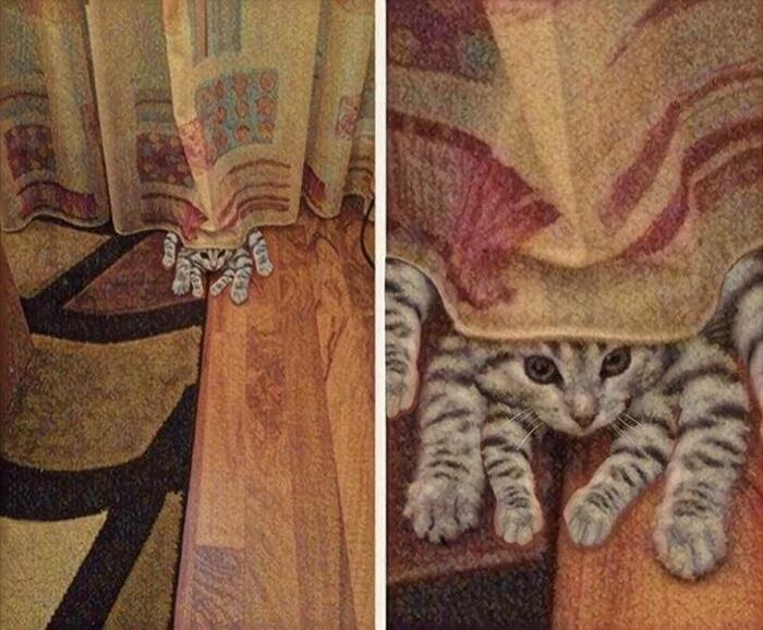 Foto gatti buffi divertenti e combinaguai