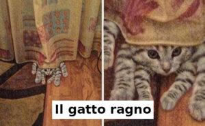 34 foto di gatti che vi faranno sorridere, di qualunque umore siate