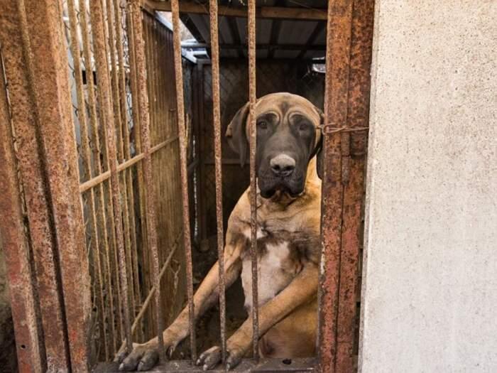 L'ultimo mattatoio per cani a Seoul è stato smantellato: un futuro senza carne di cane è più vicino