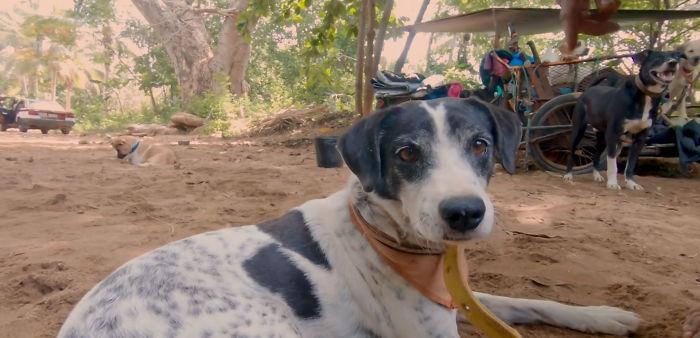 """Edgardo """"Perros"""" Juarez viaggia da sei anni col suo carretto e salva centinaia di cani senzatetto"""