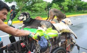 Quest'uomo viaggia da sei anni col suo carretto e salva centinaia di cani senzatetto