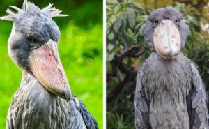 31 animali così strani da non sembrare reali