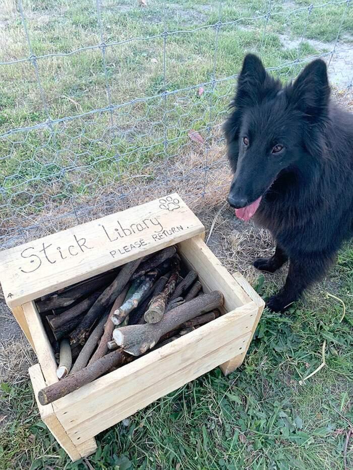 """Uomo costruisce una """"Biblioteca dei bastoni"""" per i cani del parco"""