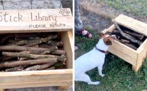 Uomo costruisce una biblioteca di bastoni per i cani del parco
