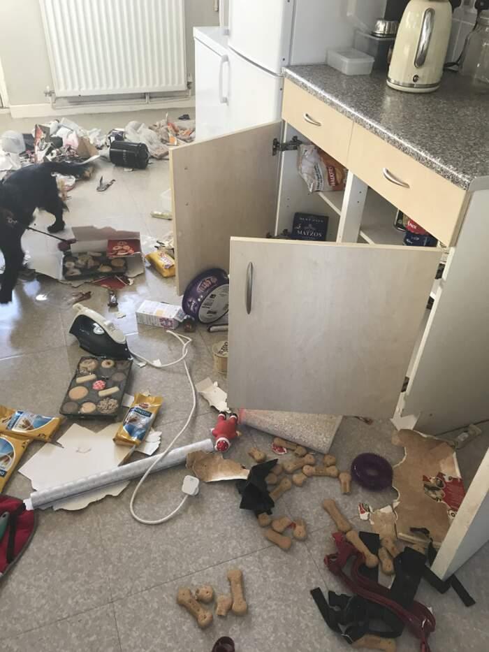 Trovano la cucina in soqquadro e pensano ai ladri, ma è stato il loro cocker