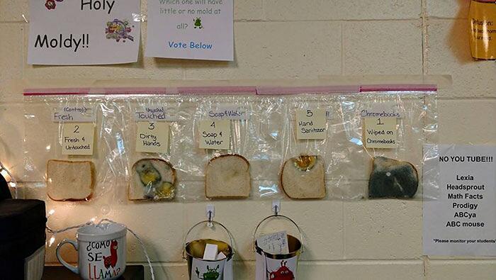 Esperimento scientifico con pane