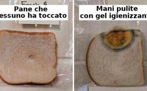 Questo esperimento scientifico con il pane vi farà scoprire quanto sono davvero pulite le vostre mani