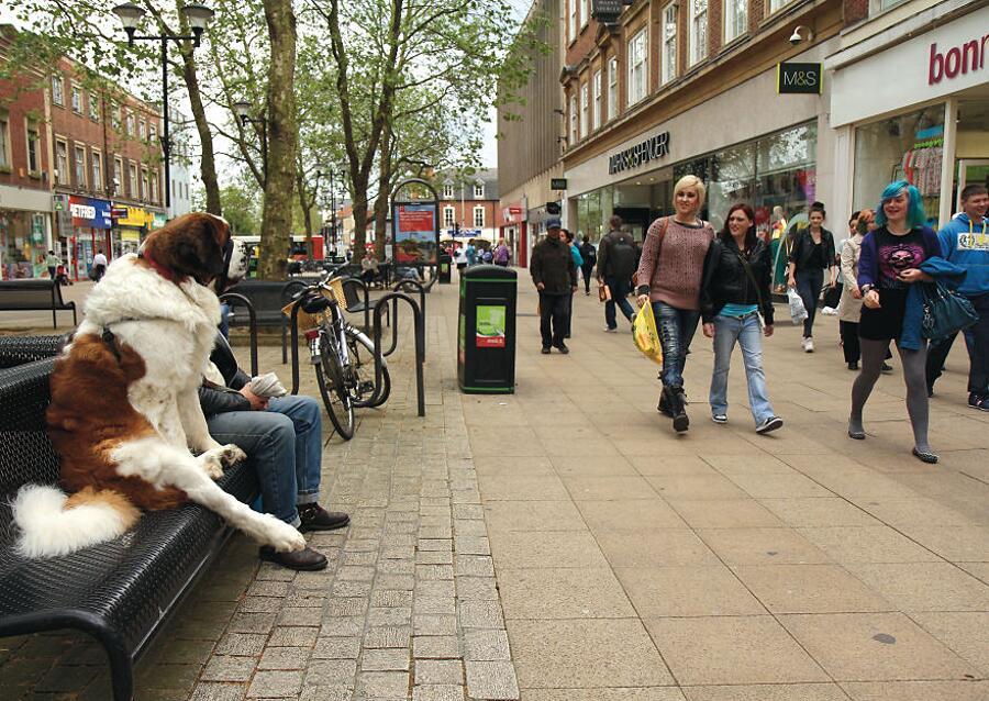 Foto di cani dal tempismo perfetto Chris Porsz