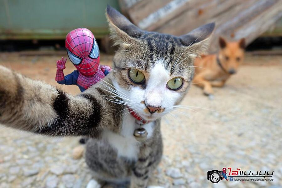 Fotomontaggi divertenti gatti e spiderman Spidey Adventure