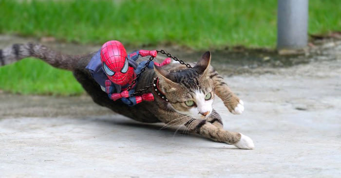 Crea fotomontaggi esilaranti di gatti che interagiscono con un piccolo Spiderman