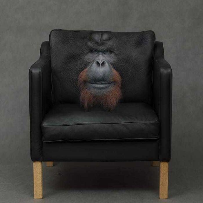 Immagini photoshoppate animali Animals in Things