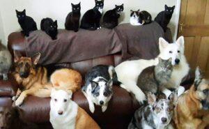 Donna impiega giorni per mettere in posa i suoi 17 gatti e cani in una foto di gruppo