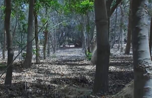 Scienziati riciclano l'acqua delle fogne per creare una foresta nel deserto egiziano, Serapium