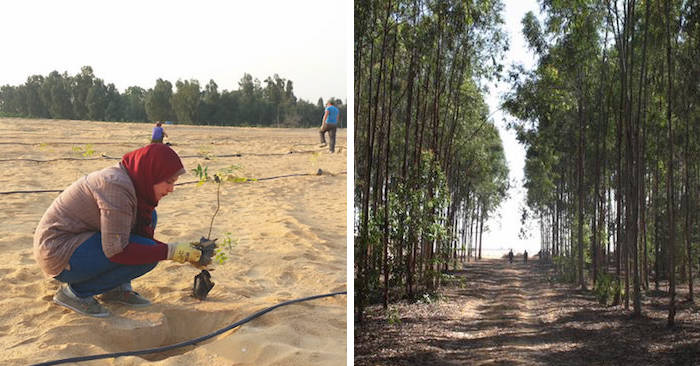 Scienziati riciclano l'acqua delle fogne per creare una foresta nel deserto egiziano