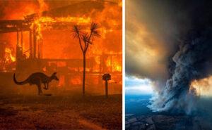 Quasi mezzo miliardo di animali sono morti negli incendi dell'Australia