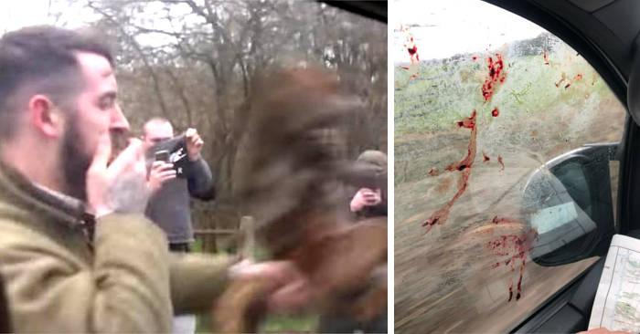 Cacciatore attacca animalisti colpendo la loro auto con una volpe morta