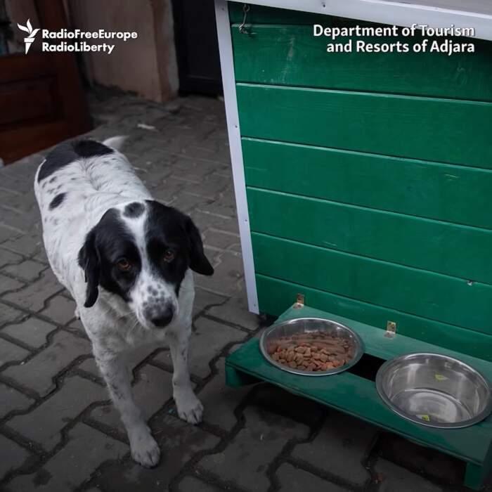 Kupata, il cane di strada che aiuta i bambini ad attraversare le strisce pedonali