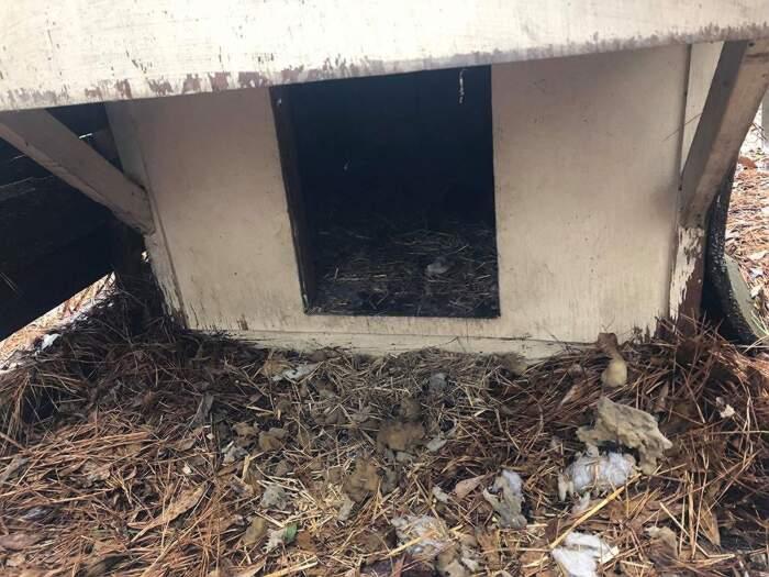 Mamma cane chiede aiuto ai volontari e li conduce ad una casa con animali maltrattati