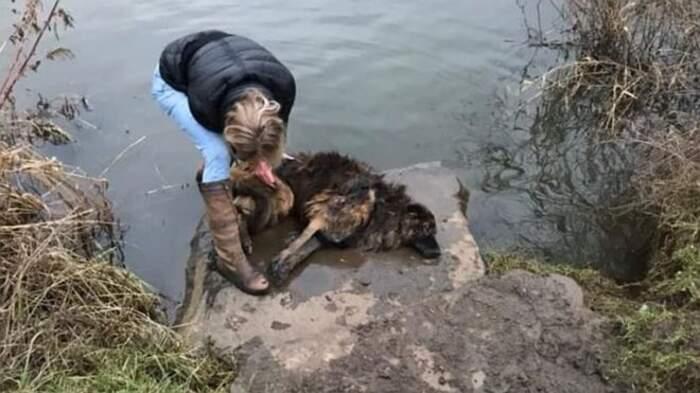 Coppia arrestata per aver gettato nel fiume un cane vivo legato a una roccia