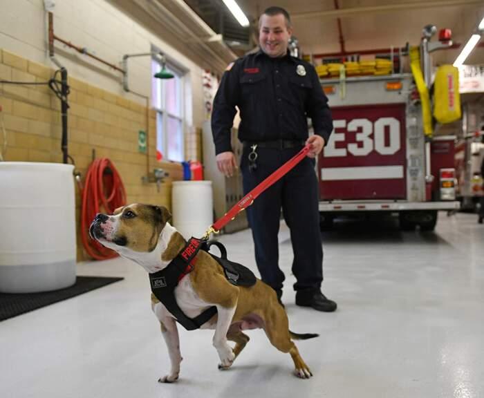 Hansel, il primo pitbull pompiere che rileva gli incendi dolosi