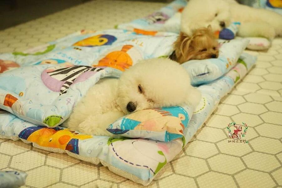 Cuccioli di cane che dormono asilo nido Puppy Spring