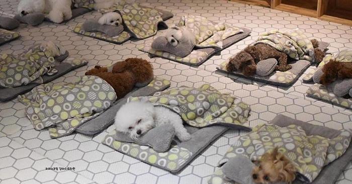 Teneri cuccioli addormentati in un asilo nido per cani, la foto che sta facendo impazzire Internet