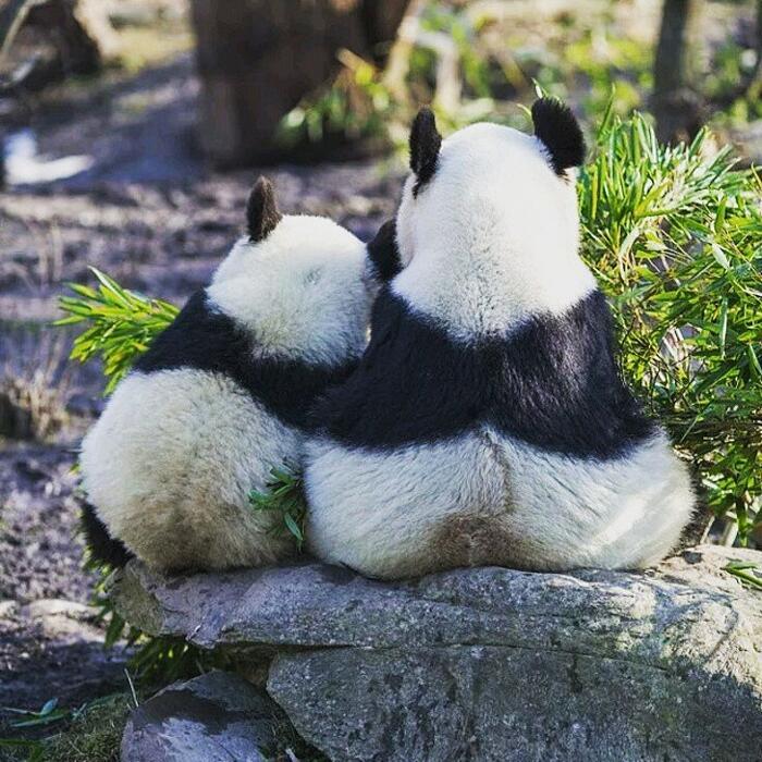 Foto di cuccioli con le mamme