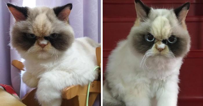 Vi presentiamo Meow Meow, il gatto più arrabbiato del web