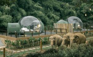 Ora puoi dormire in una bolla trasparente nella giungla circondata da elefanti salvati