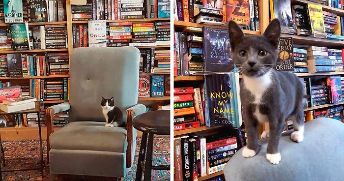 Gattini vagano liberamente in questa libreria e i clienti possono adottarli