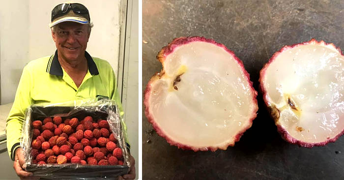 I litchi senza semi sono arrivati e li coltiva un agricoltore australiano