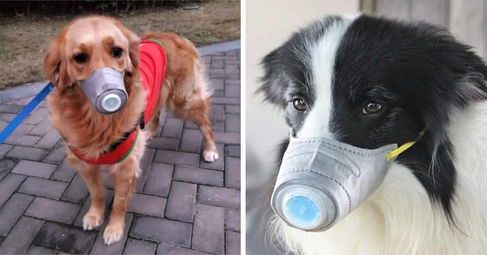 Persone comprano mascherine per cani per difendere il loro animale dal coronavirus