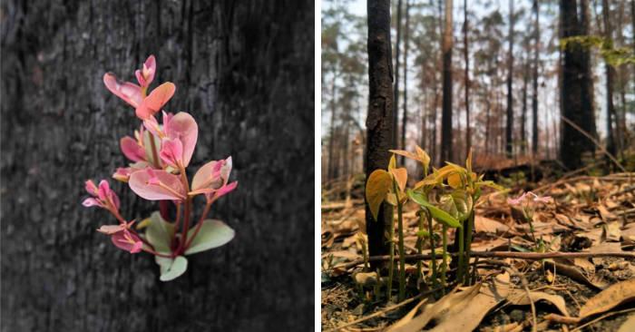 Foto di speranza mostrano la vita tornare nei boschi devastati dagli incendi in Australia
