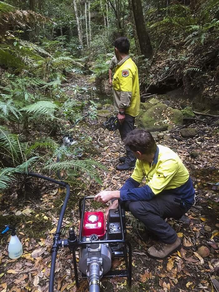 Pompieri australiani in missione segreta salvano gli ultimi alberi-dinosauro dagli incendi